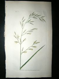 Curtis: 1804 Hand Col Botanical Print. Meadow Fescue Grass 5